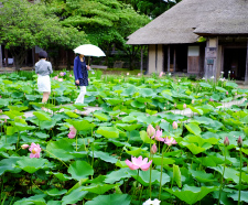 Traditional Houses and Lotus Pond